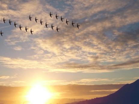 Let ptic v neznani svet